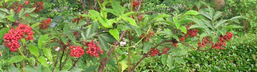 De Andersomtuin (Voorjaar in de vaste-planten-tuin deel 3)
